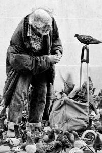 lhomme-et-le-pigeon